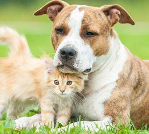non aux tests sur les animaux