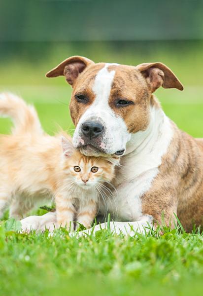 Etamine du lys dit non aux tests sur les animaux.