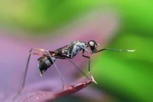 Photo d'une fourmi en macro - se protéger des insectes